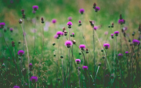 Wallpaper Pink wildflowers, green background, hazy