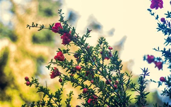 Обои Красные цветы, ветки, туманные, Весна