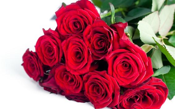 Fondos de pantalla Rosas rojas, ramo, flores, fondo blanco.