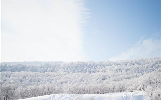 Fondos de pantalla Nieve, árboles, invierno, mundo blanco