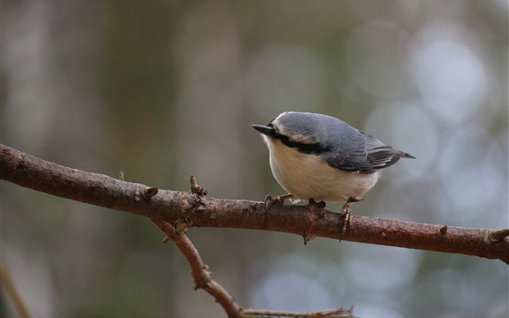 Fondos de pantalla Gorrión, pájaro solitario