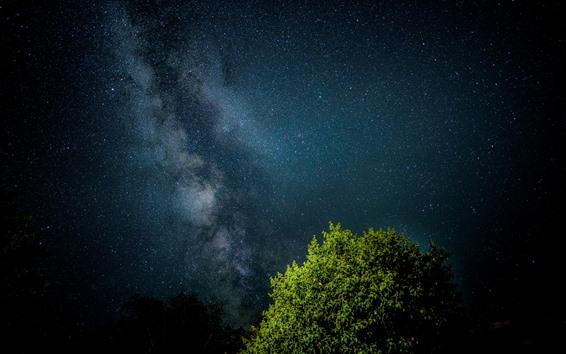 Fondos de pantalla Estrellada, cielo, noche, arbol, hojas verdes