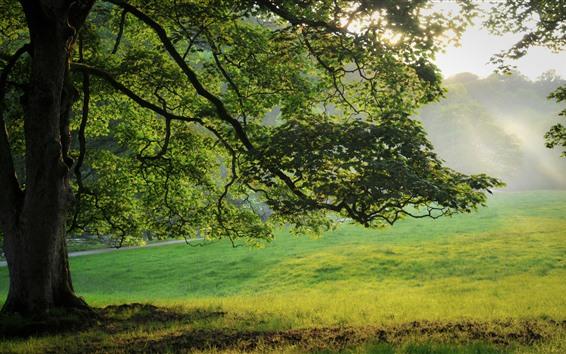 Fondos de pantalla Verano, árbol, hojas verdes, Prado, niebla, rayos del sol