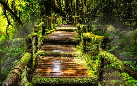 Fond d'écran Thaïlande, parc national doi inthanon, jungle, mousse, chemin, arbres