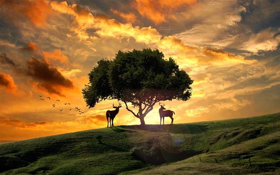 Обои Дерево, олени, горка, птицы, закат, облака, креативный дизайн