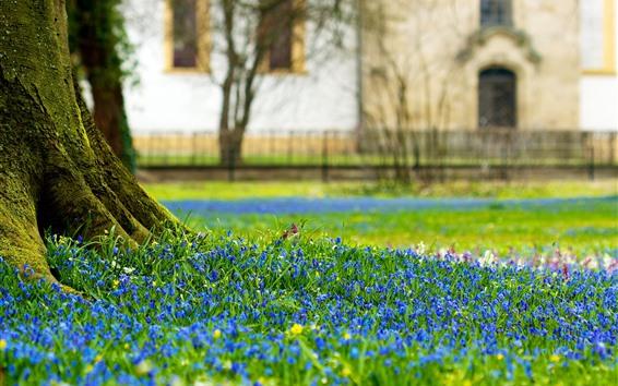 배경 화면 나무 줄기, 푸른 꽃, 봄