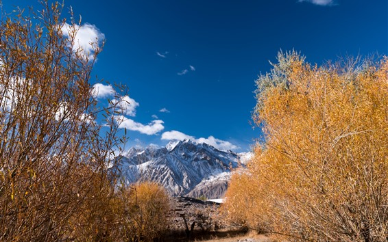 Wallpaper Trees, autumn, Pamirs, mountains, blue sky