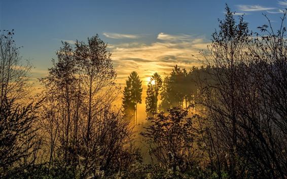 Papéis de Parede Árvores, floresta, nascer do sol, névoa, manhã