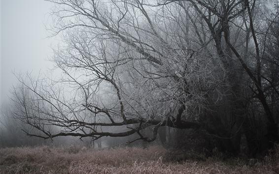 Fondos de pantalla Árboles, escarcha, hierba, niebla, frío.