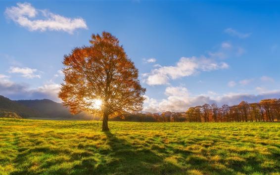 Fondos de pantalla Árboles, prado, sol, otoño.