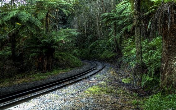 Обои Деревья, железная дорога, тропический