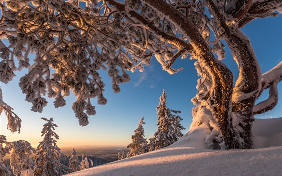Fondos de pantalla Árboles, nieve, invierno, paisaje natural.