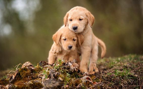 Fondos de pantalla Dos cachorros lindos