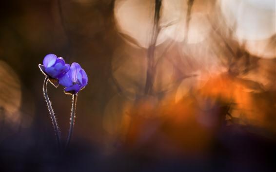 Fondos de pantalla Dos flores púrpuras, fondo nebuoso