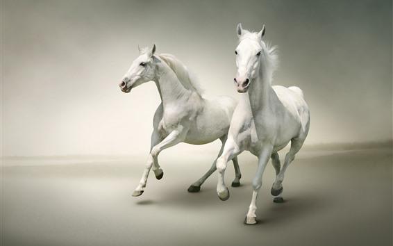 Fondos de pantalla Dos caballos blancos corriendo