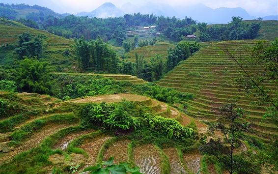 Fond d'écran Vietnam, campagne, champs, maison, arbres