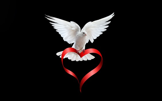 Papéis de Parede Pomba branca, fita de coração de amor, fundo preto