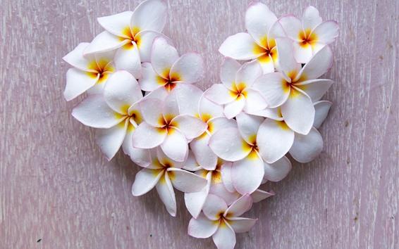 Fondos de pantalla Flores blancas de plumeria, gotas de agua, corazón de amor.