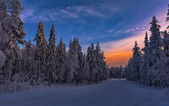 배경 화면 겨울, 황혼, 나무, 눈, 추위
