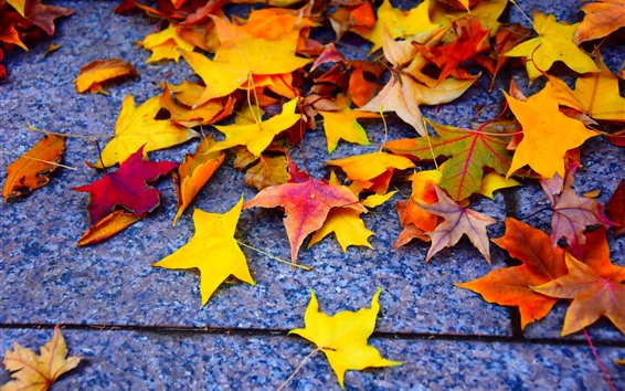 Wallpaper Yellow and red maple leaves, ground