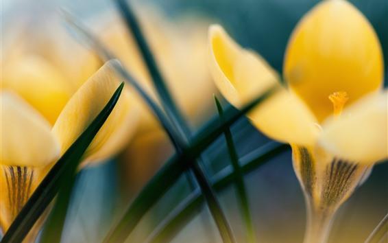Fondos de pantalla Azafrán amarilla, brumosa