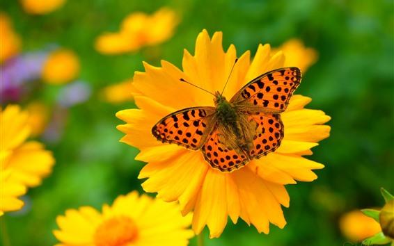 Fondos de pantalla Flor amarilla, pétalos, mariposa