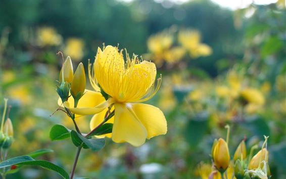Wallpaper Yellow flowers, petals, pistil, hazy background