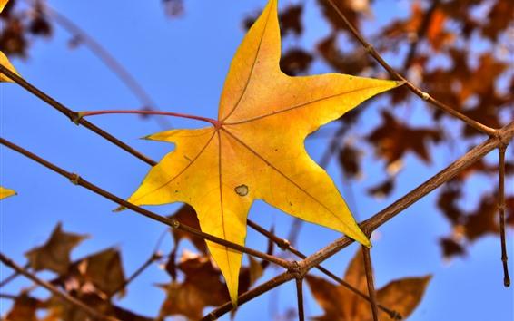Fondos de pantalla Hoja de arce amarillo, ramitas, otoño