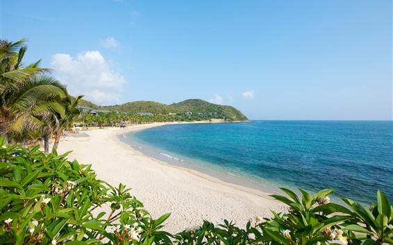 Wallpaper Beach, sea, palm trees, tropical, blue sky