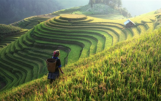 Wallpaper Beautiful rice terraces, China, countryside, woman, slope, fog, morning