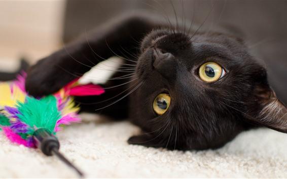 壁紙 黒い子猫、黄色い目、遊び心のある