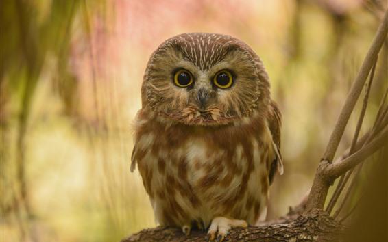 Wallpaper Cute little owl, standing