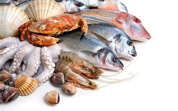 壁紙 魚、カニ、エビ、貝殻、白背景