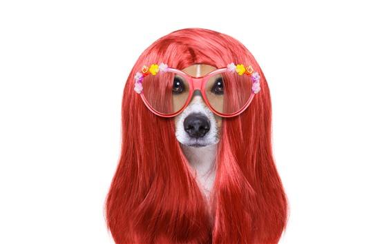 배경 화면 재미 있은 동물, 개, 헤어 스타일, 안경