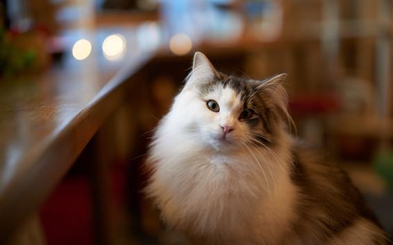 Обои Пушистый кот смотреть на вас, комната, туманный