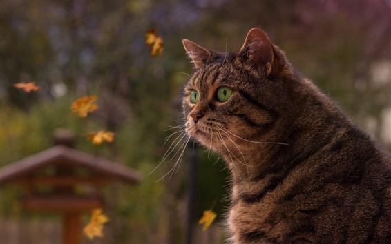배경 화면 회색 고양이, 녹색 눈, 애완 동물