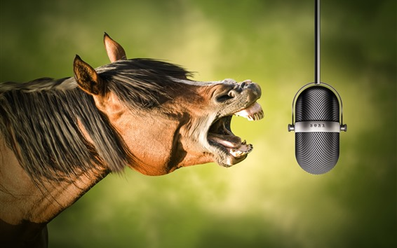 Wallpaper Horse sing, cool, microphone