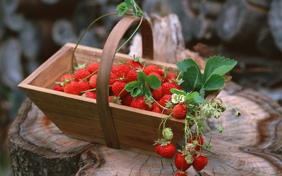 Wallpaper Many strawberries, basket, stump