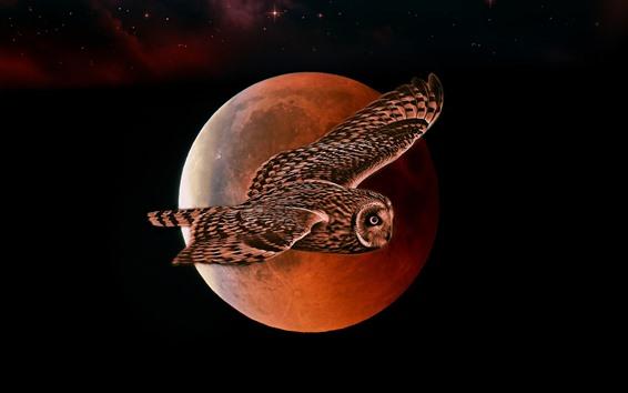 Wallpaper Owl flight, moon, night