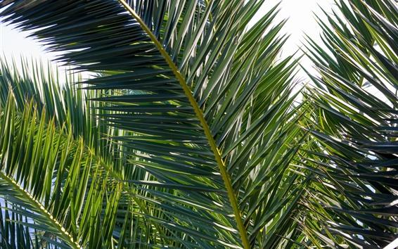 Wallpaper Palm tree leaves, plants