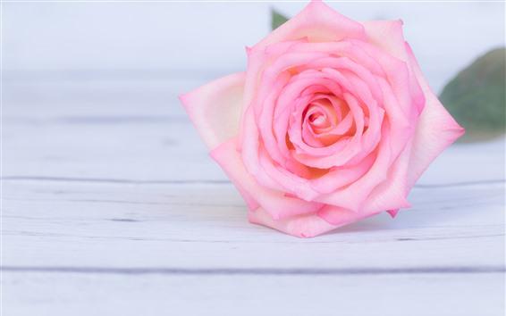 Papéis de Parede Close-up rosa rosa, placa de madeira