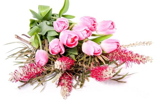 壁纸 粉红色的郁金香,白色背景