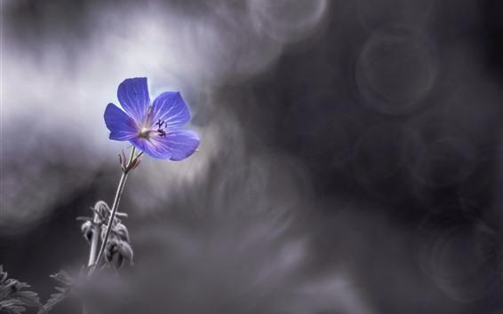 Wallpaper Purple flower close-up, petals, blurry