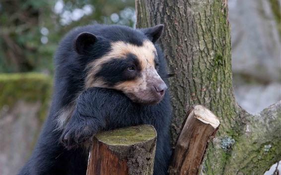 壁纸 悲伤的熊