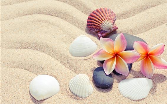 壁紙 砂、プルメリア、貝殻