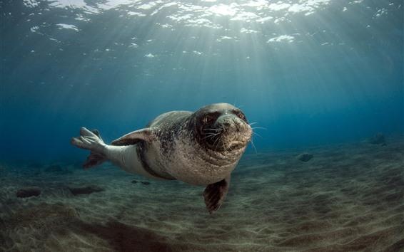 Hintergrundbilder Seetier, Seehunde, Unterwasser, Sonnenschein