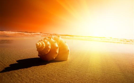 Wallpaper Seashell, sands, sunshine, glare