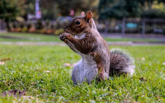 배경 화면 잔디에 서 있는 다람쥐