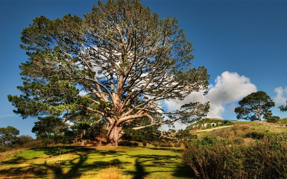 Обои Лето, большое дерево, кусты, тень