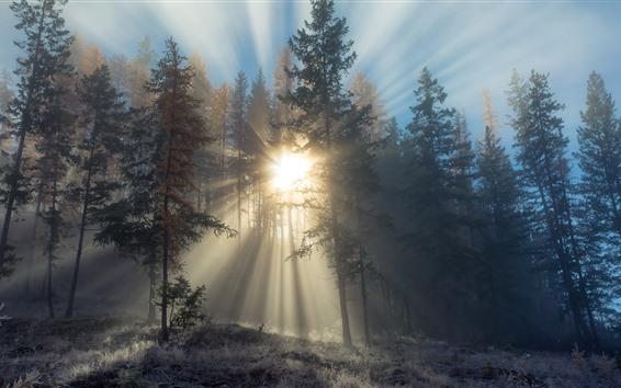 Wallpaper Sunrays, trees, fog, morning